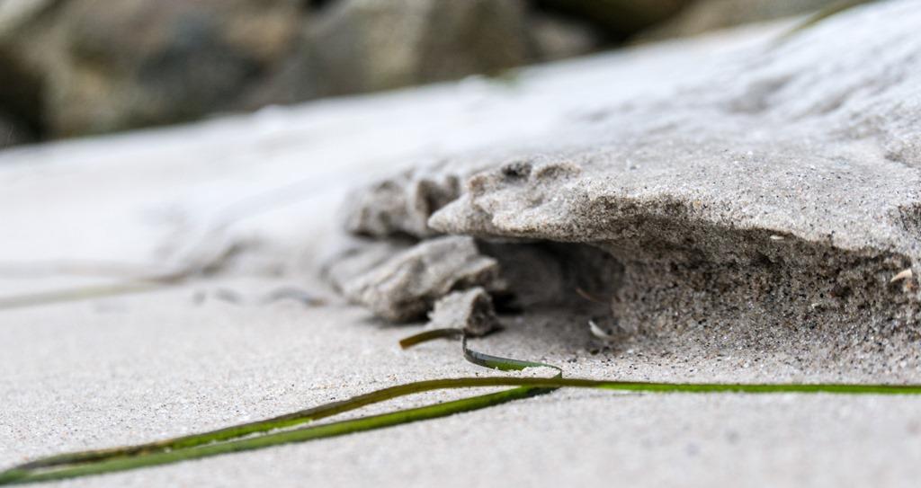 Stranddetail