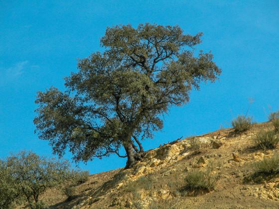 GI Thema Baum