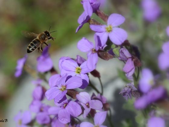Bienchen summt herum