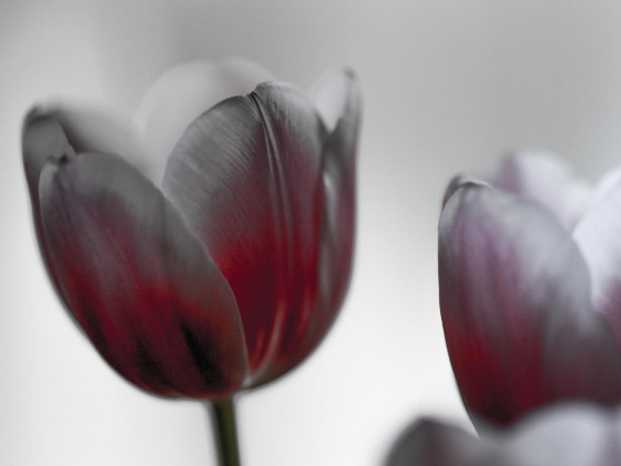 Frühlingsgruss 2
