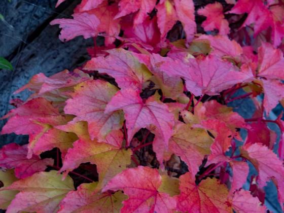Herbstfarben an einer Betong Wand