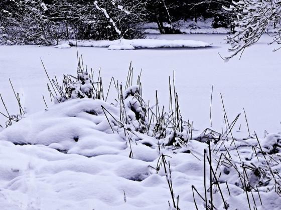 Der Winterteich