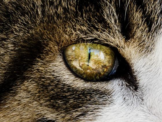 Tinka's eye