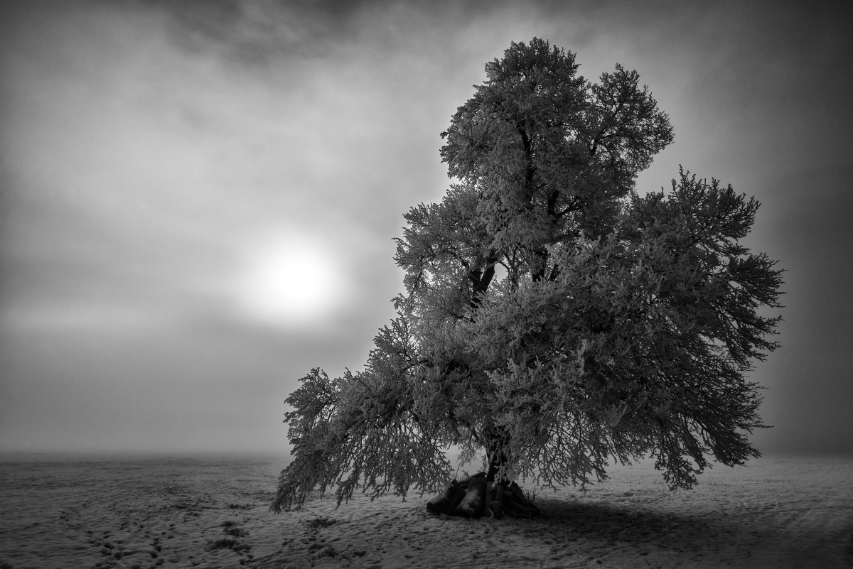 Baum in Nebel s/w