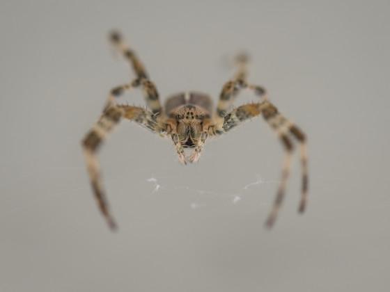 Im Angesicht der Spinne