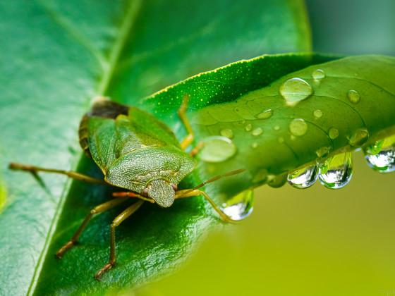GI Thema Grün