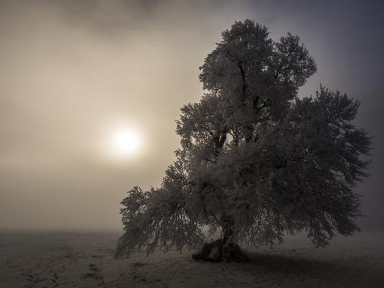 Baum im Nebel Original
