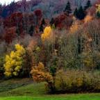 Herbst im Götzenthal