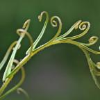 Pflanze mit Löckchen :-)