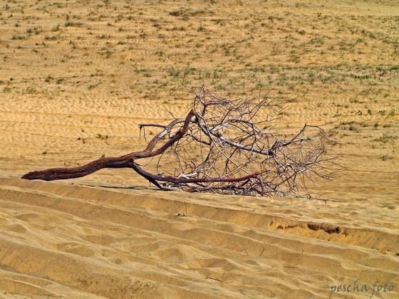 Vom Wind hergeweht
