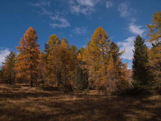Der Goldener Herbst