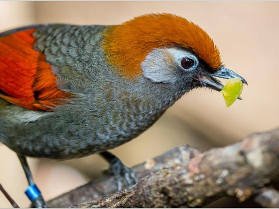 Vogelfütterung II