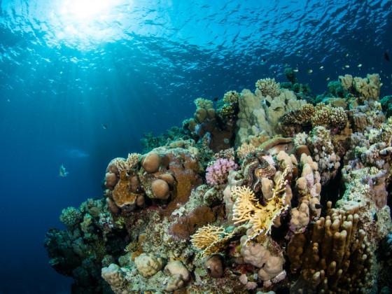 Sonne auf Riff im Roten Meer
