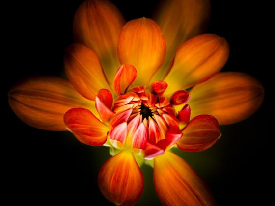 Blütentrio 1