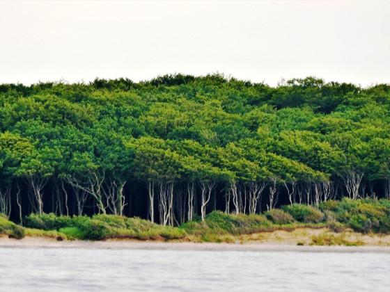 Gespensterwald von See