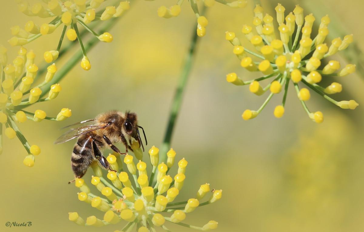 ein fleissiges Bienchen