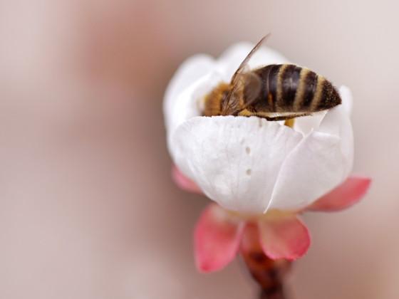 Pollen sammeln