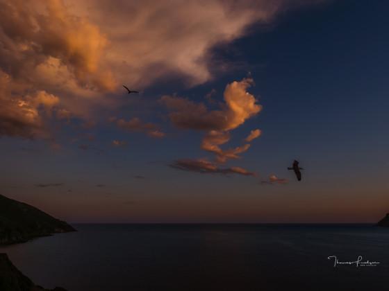 Lacona Isola Elba
