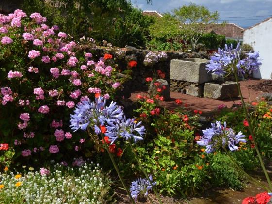Das Wettblühen im Garten einer Winzerei