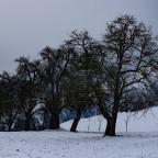 GI Contest Winter