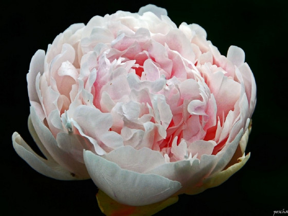 Das Blumenwunder