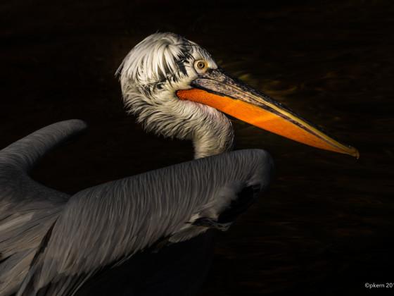 Pelikan high contrast