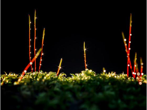 Blinking Moss