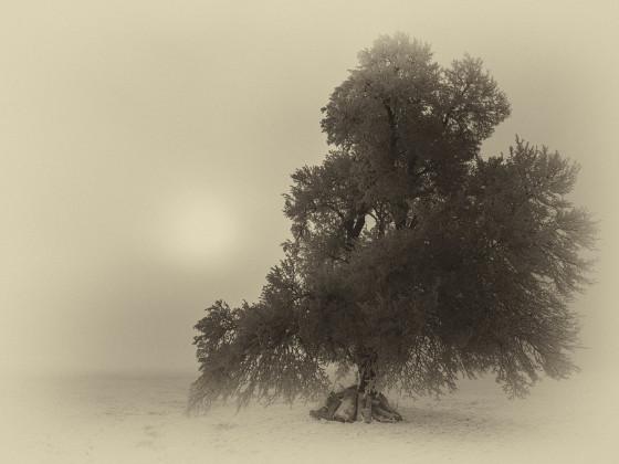 Baum im Nebel überbelichtet
