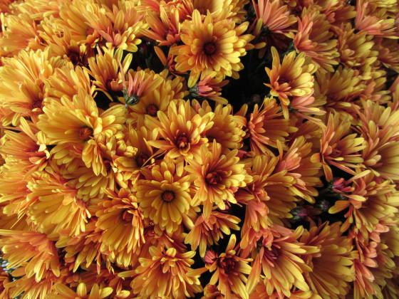 Blumenbund