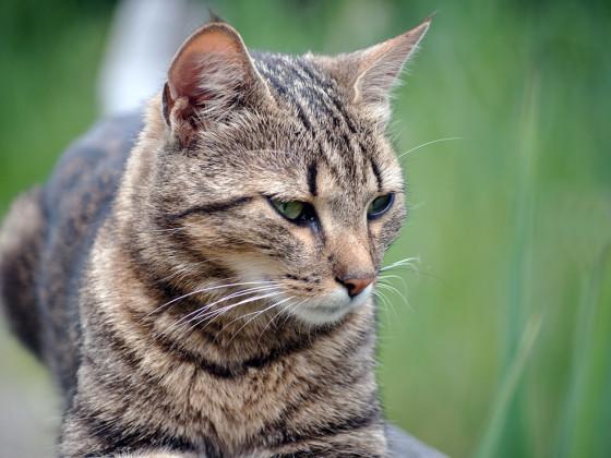 Das Katzenporträt