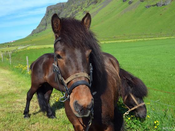 Was wäre Island ohne