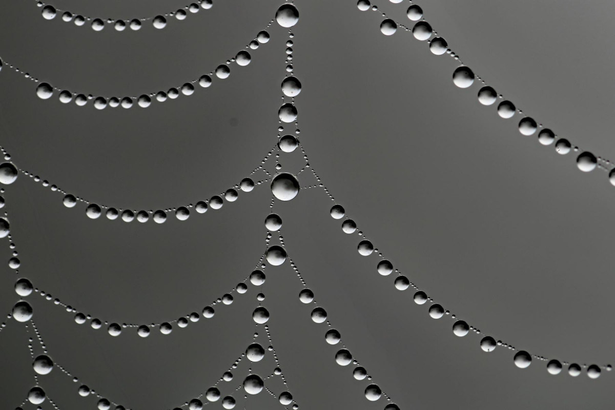Perlen vom Feinsten 2