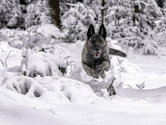 Hunde - Shooting in freier Natur