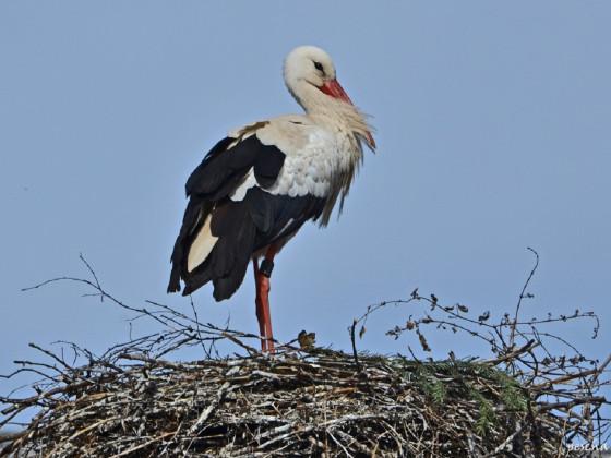Das Nest ist bereit